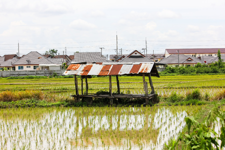 Old hut in Rice field near housing estate in urban fringe chiangmai city