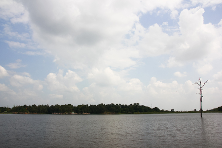 One die tree in reservoir on cloudy day