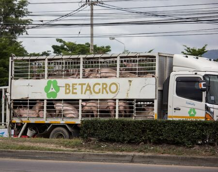 Chiangmai, Thailand - July 11 2019:   Pig Animal cage container truck of Betagro Company. On road no.1001, 8 km from Chiangmai Business Area. Redakční