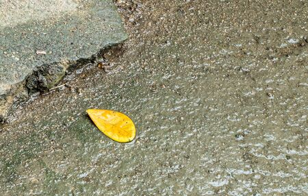 tabular: Closeup dirty and wet cement floor with yellow leaf texture background Stock Photo