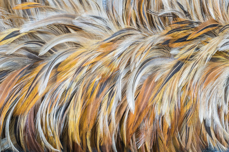 duster: Closeup feather duster texture background