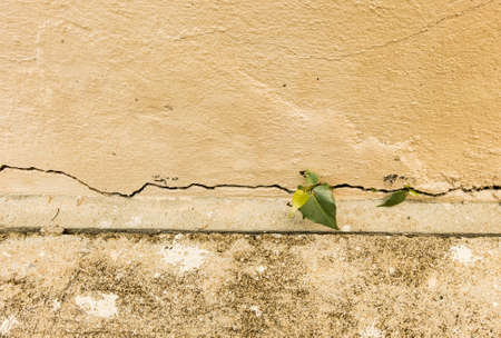 grown up: Vintage tone of small plant grown up at the cracked concrete wall