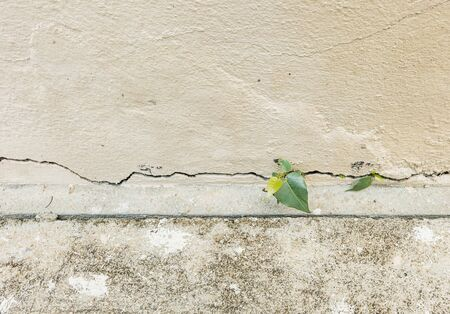 grown up: Small plant grown up at the cracked concrete wall Stock Photo