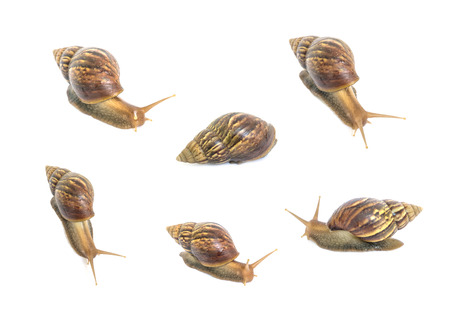 slow motion: Closeup group of snail in many act isolated on white background Stock Photo