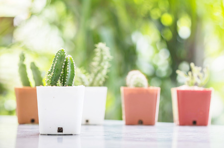 Closeup cactus in white plastic pot on mable table at the in front of house with blurred garden view textured background Stock Photo