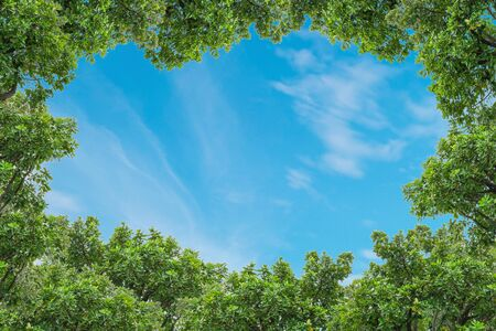 Blue sky with thinly cloud with green tree background