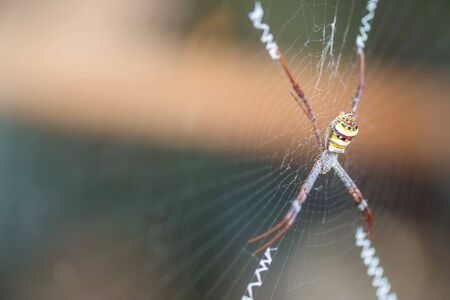 animal trap: Closeup colorful spider on cobweb with copy space