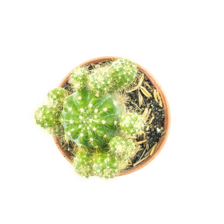avocation: Closeup fresh green cactus in brown plastic pot for decorate isolated on white background in top view
