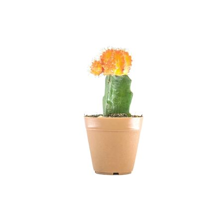 Closeup beautiful fresh cactus in brown plastic pot for decorate isolated on white background Stock Photo