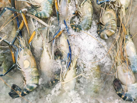 Closeup pile of raw freeze dead shrimp for cook in tray with ice textured background Standard-Bild