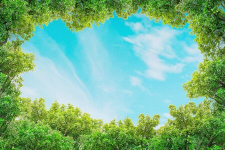 Closeup space of blue sky with thinly cloud with green tree textured background