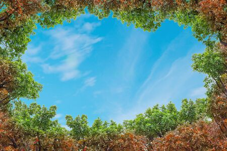 Closeup space of blue sky with thinly cloud with green and red tree textured background