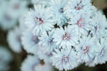 Closeup blue flower in the garden textured background Standard-Bild - 118720037