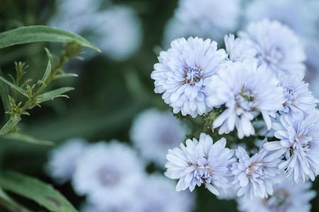 Closeup blue flower in the garden textured background Standard-Bild - 118720046