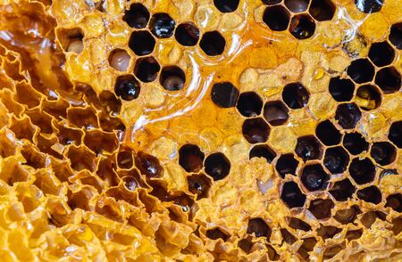 Closeup surface honeycomb with honey bee textured background
