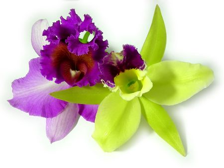 Green and purple orchid together close up Stock Photo