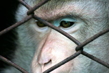 Captive Stock Photo - 679436