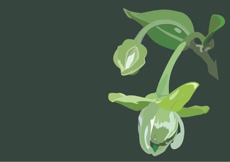 flourishing: Tropical Green Flowers Illustration