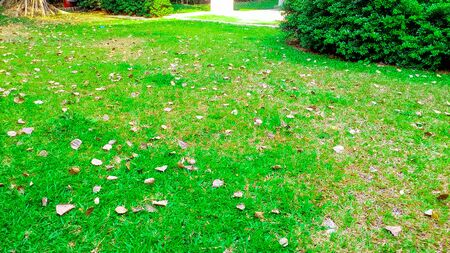 dry leaves: Green grass and dry leaves on ground surface texture background