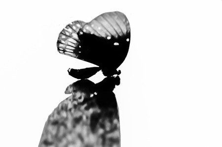 iluminado a contraluz: retroiluminada silueta de la mariposa