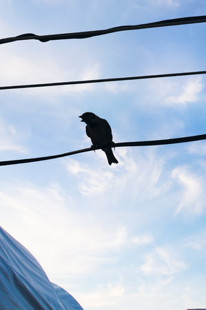 small flock: Sparrow on a wire silhouette. Backlight. Stock Photo