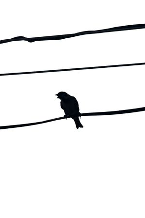 Sparrow on a wire silhouette. Backlight. Stock Photo