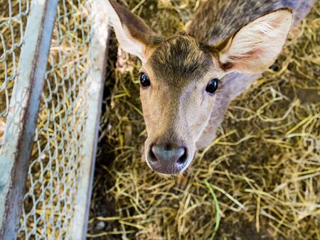 caged: Thailand was caged deer at the temple. Stock Photo