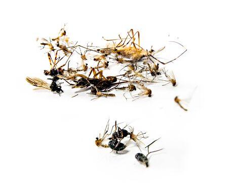 tirar basura: Los mosquitos y otros insectos da�inos muerte tirar basura, eliminan. abstact macro en el fondo blanco aislar}.