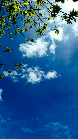 bright sky: Tree branches backlit shiny black and yellow foliage. With blue skies In temples and ancient