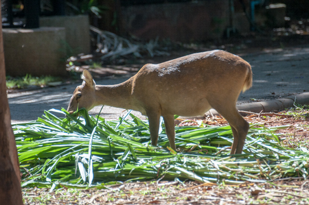 play the old park: Deer that were fed freely Zoo in Thailand Not in a cage.