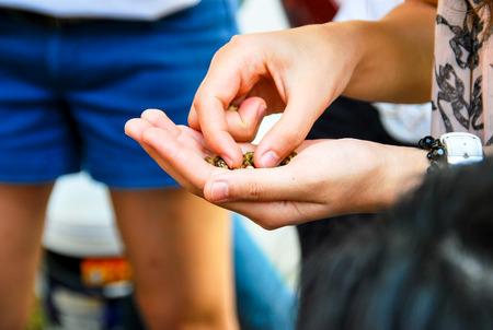 cereals holding hands: Seeds in the hands of young women are ready to grow. Stock Photo