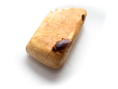 molesto: Cucarachas pequeños animales distraer a un molestos causas de la enfermedad alza sobre un pan de pasas. Foto de archivo