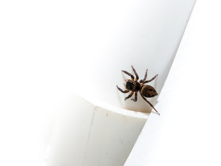 Spider on a white wall. Close-up zoom short. Stock Photo