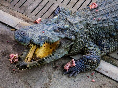 white nile: Crocodile sleep open mouth The food is chicken in the zoo. Stock Photo