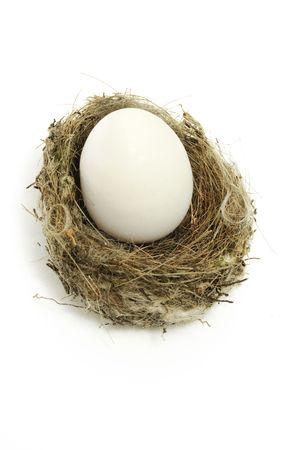 incubate:  birds nest