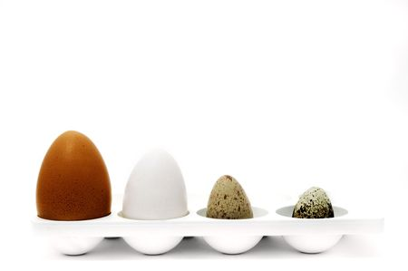 divergence: eggs