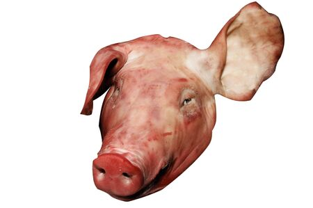 whistleblower: pig head