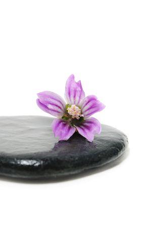 thalasso: pierre et fleurs Banque d'images