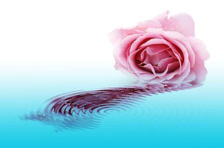 thalasso: rose