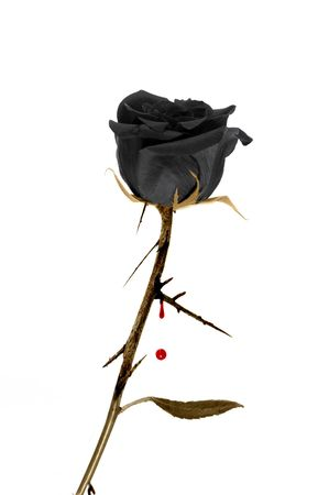 hate: black rose Stock Photo