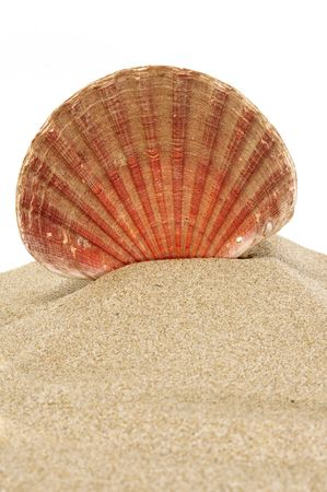 shell Stock Photo - 5251870