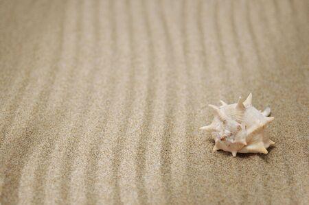 karesansui: sea snail