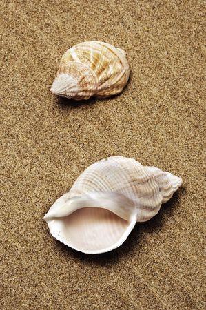 thalasso: escargots