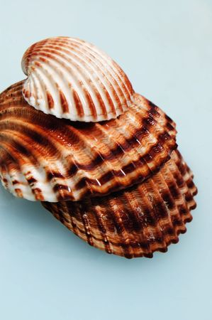 almejas: shells Stock Photo