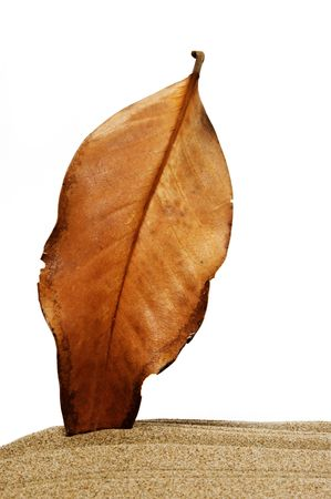 karesansui: leaf Stock Photo