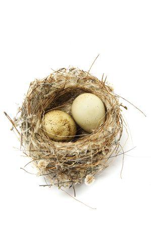 incubate: nest