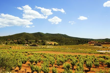 Montferri vineyards of Tarragona in Spain Stock Photo - 6285097