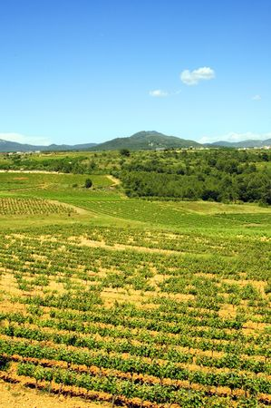Montferri vineyards of Tarragona in Spain Stock Photo - 6285115