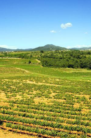 Montferri vineyards of Tarragona in Spain Stock Photo - 6285115