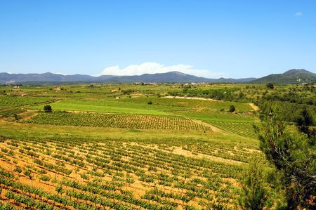 Montferri vineyards of Tarragona in Spain Stock Photo - 6336918